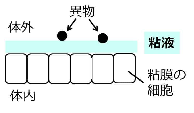 粘膜の細胞の表面に、厚い粘液の層があり、異物がここにくっつき、粘膜の細胞に触れない。これを描いた図。