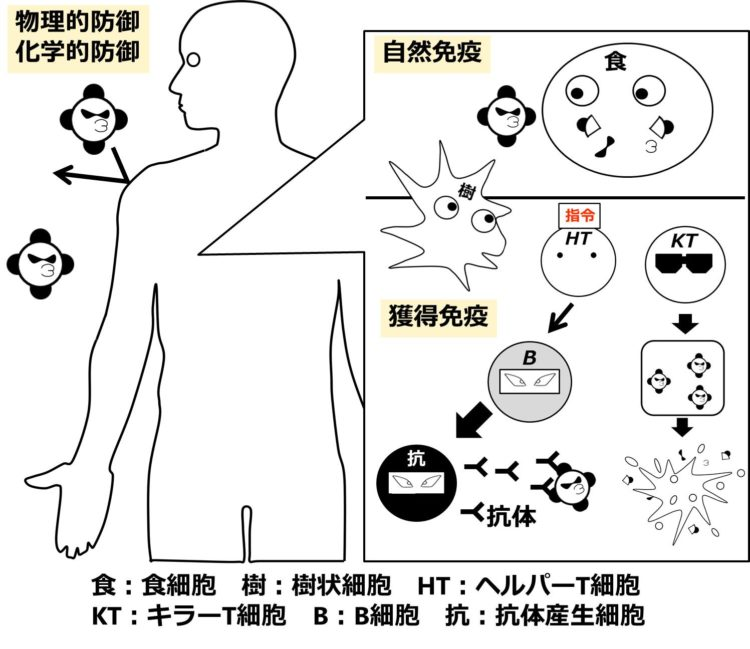 第1段階から第3段階までの図をまとめて描いてある。