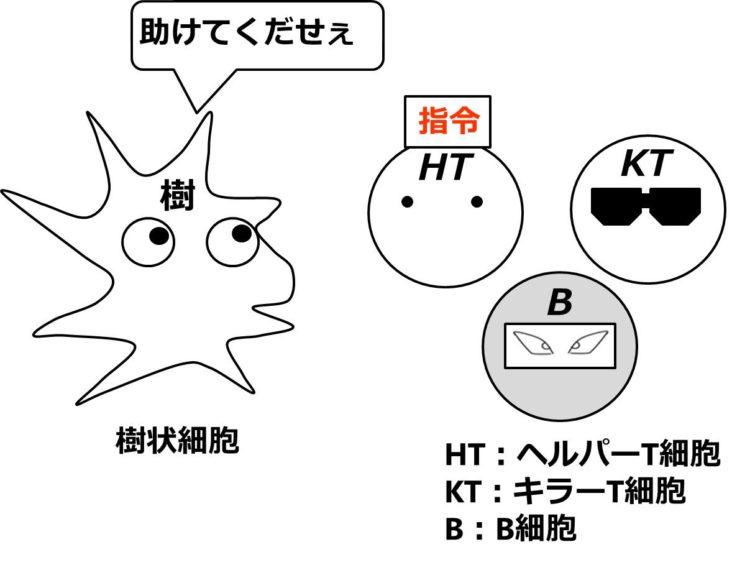 ヘルパーT細胞は、指令の文字をかかげている。キラーT細胞はターミネーター風に、B細胞は忍者風に描いてある。