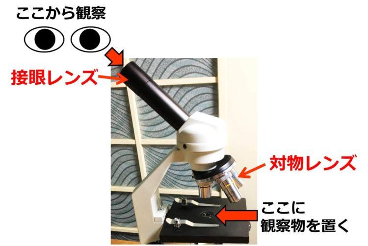 眼に近い接眼レンズと、観察物に近い対物レンズの写真。