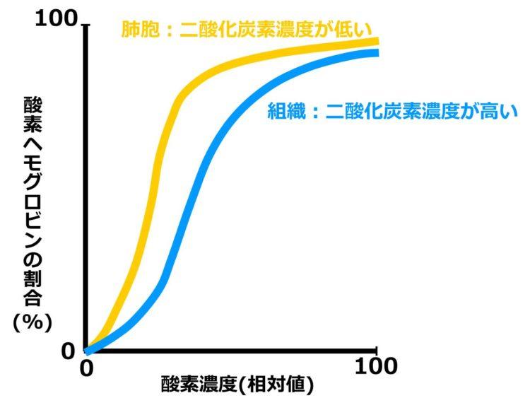 成人のヘモグロビンの酸素解離曲線。2本の横長のS字の曲線が描いてある。胎児と母体の酸素解離曲線と似ているが、全く異なるもので、上側に位置する曲線は、二酸化炭素濃度の低い場合の曲線であり、下側の曲線は二酸化炭素濃度が高い場合の曲線である。