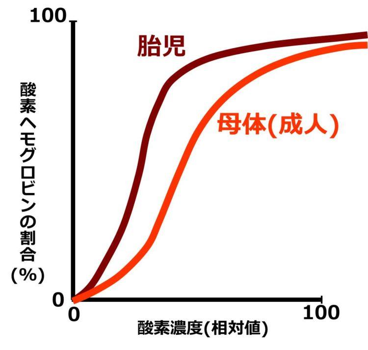胎児と母体のヘモグロビンの酸素解離曲線。縦軸は酸素ヘモグロビンの割合(%)で、横軸は酸素濃度(相対値)。どちらも似た、横長のS字型をしているが、胎児の酸素解離曲線は、母体の酸素解離曲線よりも上側に位置している。