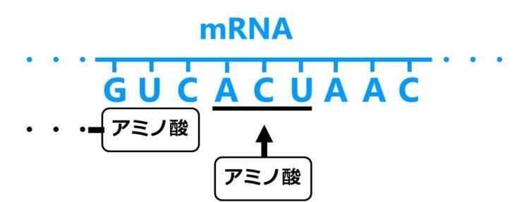 mRNA上の3つの塩基のすぐ下に、1つのアミノ酸が四角形で描いてある。