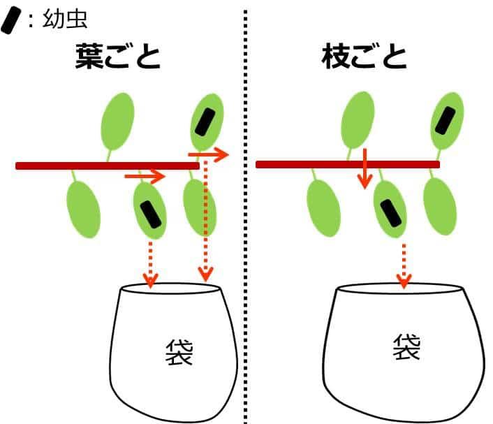 袋の中に葉や枝を落とすことを描いた図。