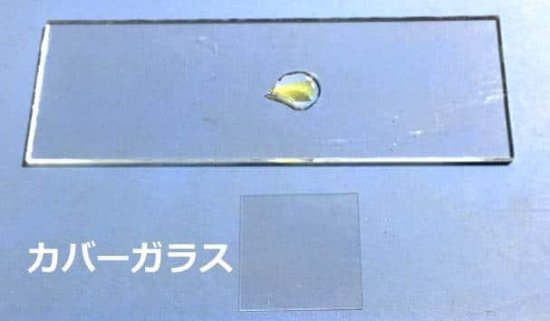 カバーガラスの写真