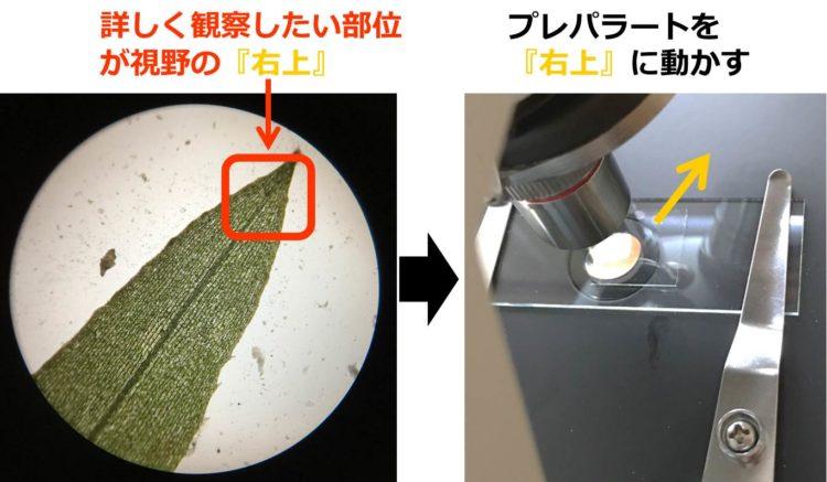 視野の右上部分を、視野の中央に持ってくるには、プレパラートを右上に動かすことを描いた図