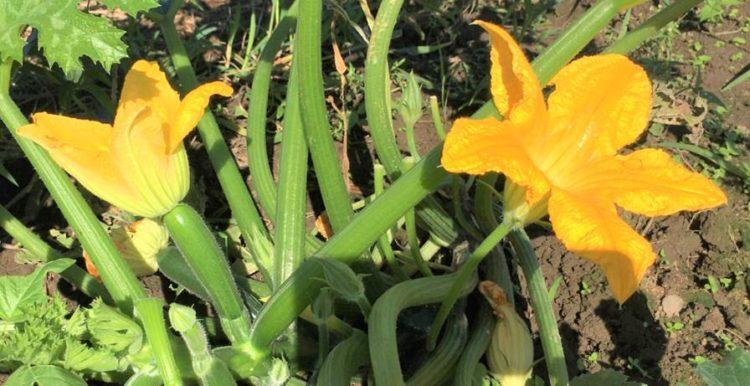 花が開いている写真