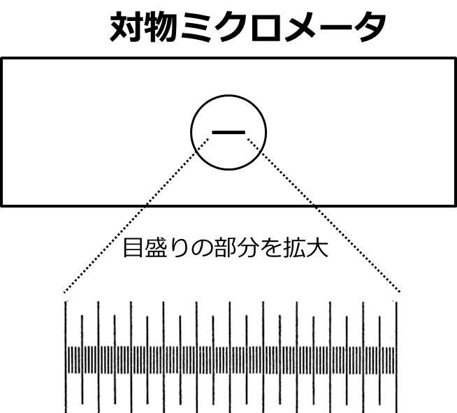 対物ミクロメータの図。目盛りは、5目盛ごとにとても長く飛び出ている。