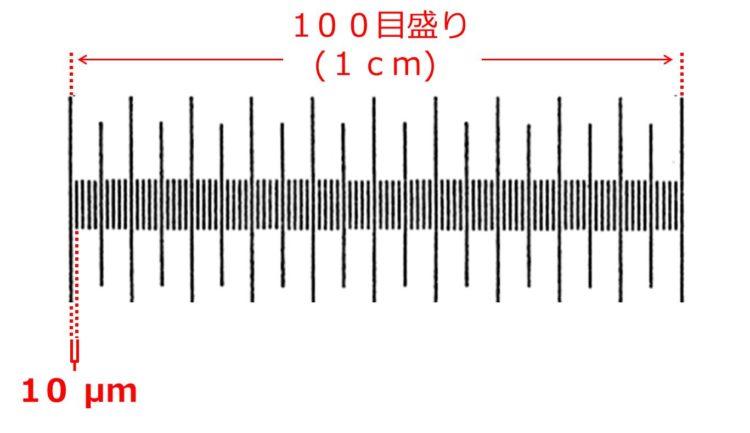 対物ミクロメータの目盛の拡大図。目盛の端から端まで1cmで100目盛分。1目盛は、10μm分。