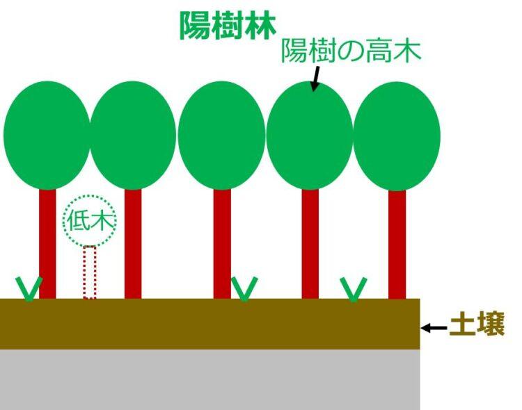 陽樹林の図。低木林よりさらに土壌が厚い。低木よりも背丈の高い陽樹が沢山描いてある。