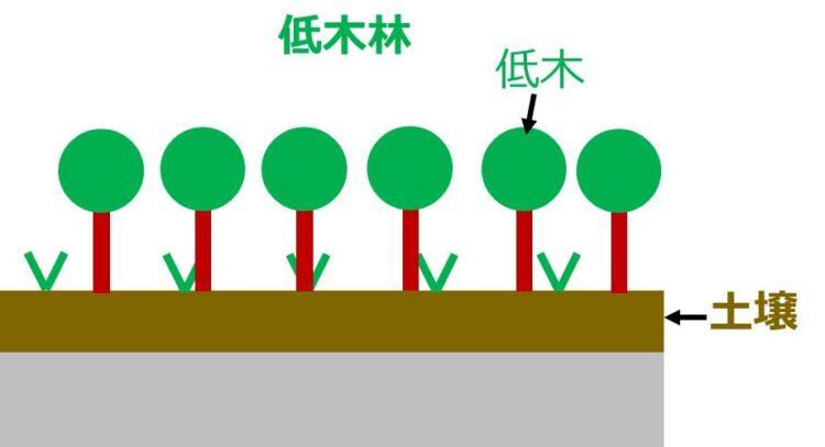 低木林の図。草原よりも土壌が厚くなり、草よりも背丈の高い低木が沢山描いてある。