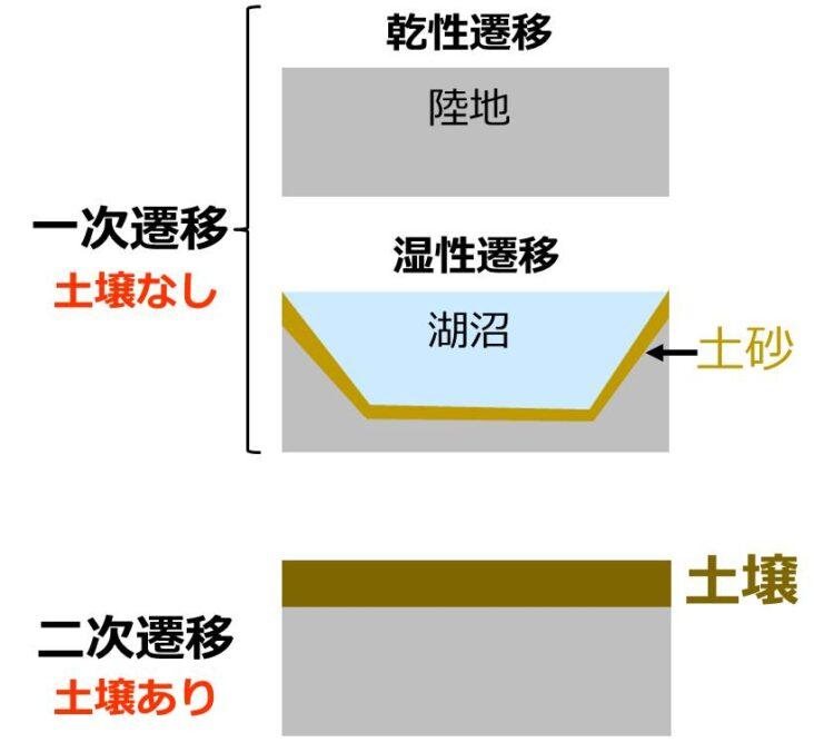 遷移の分類図。一次遷移の始まりの状態として、土壌の無い岩石の図と、湖沼の図が描いてある。二次遷移の始まりの状態として、岩石の上に土壌が蓄積した図が描いてある。