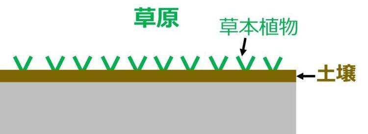 草原の図。土壌の厚みが増している。