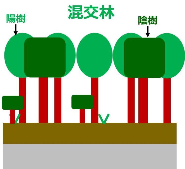 高木の陽樹と陰樹が混ざって生育する混交林の図
